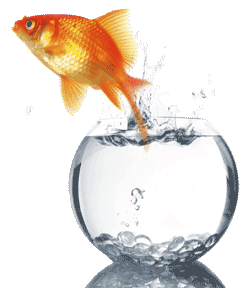 Goldfish vs Piranha and your Limiting Beliefs